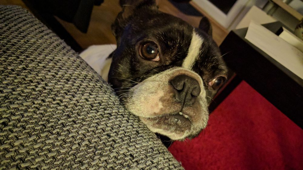 Petition gegen ungerechte Hundesteuer